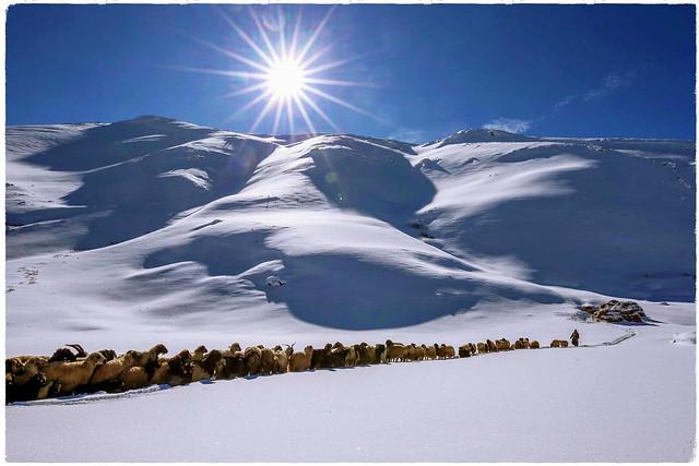 EVİNÂ WELATEME     Kurdistan ❤️کوردستان
