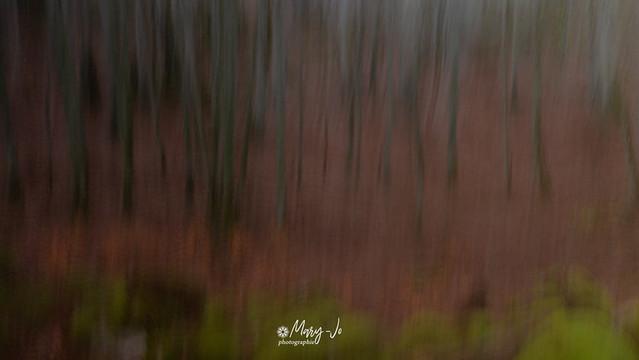 La forêt en couleurs ...  The forest in colors ...