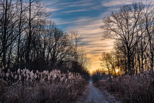 2020 canada february ontario windsor ojibwayprairienaturereserve winter
