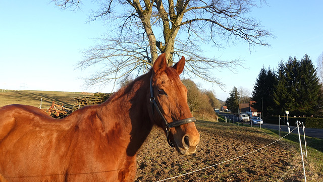 Germany - Horse in the Vogelsberg Hills