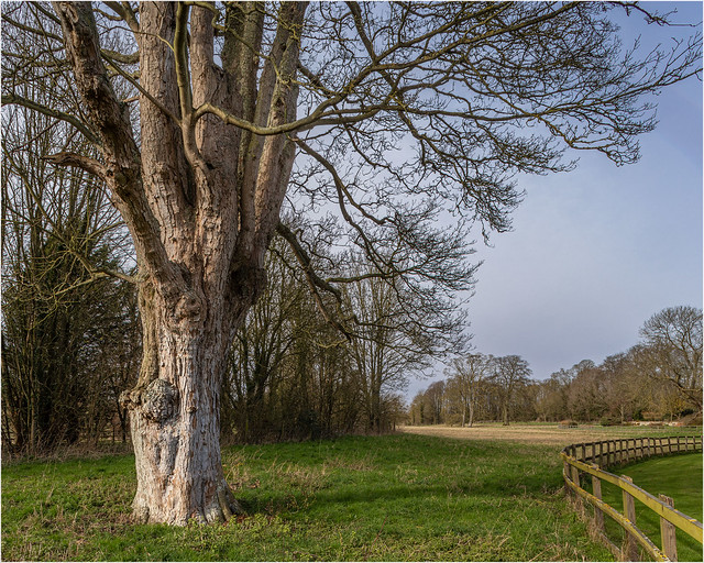 Tree and meadow...
