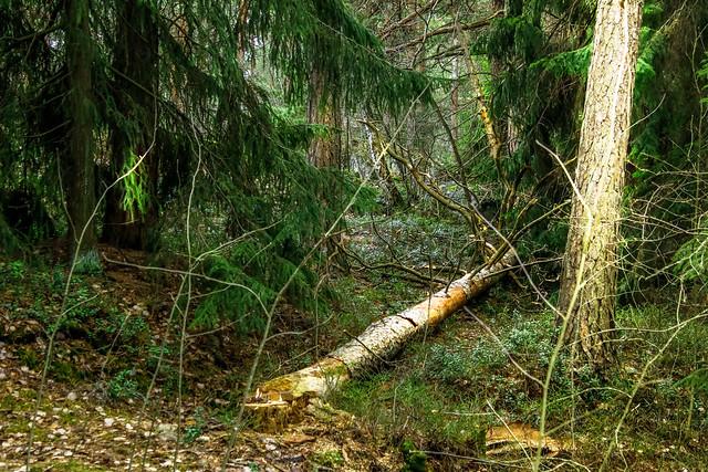 Käpylä metsä