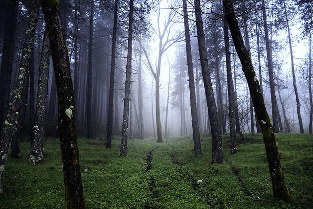 Mystic Nature III