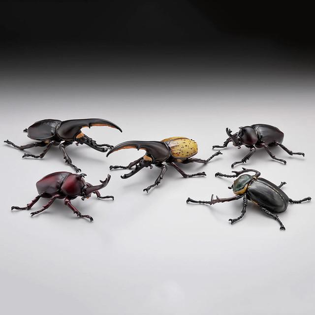 昆蟲界的王者!海洋堂《膠囊Q博物館》獨角仙大全(カプセルQミュージアム カブトムシ大全)