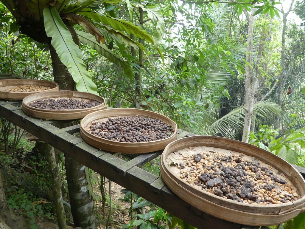 Coffee Plantation, Ubud, Bali
