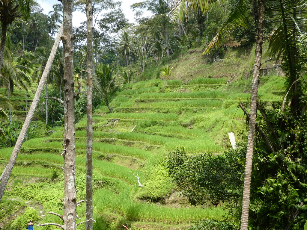 Tegallalang Rice Terraces near Ubud, Bali