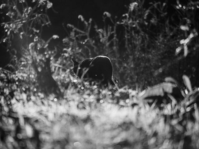 yard panther