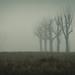 Wupperauen im Nebel