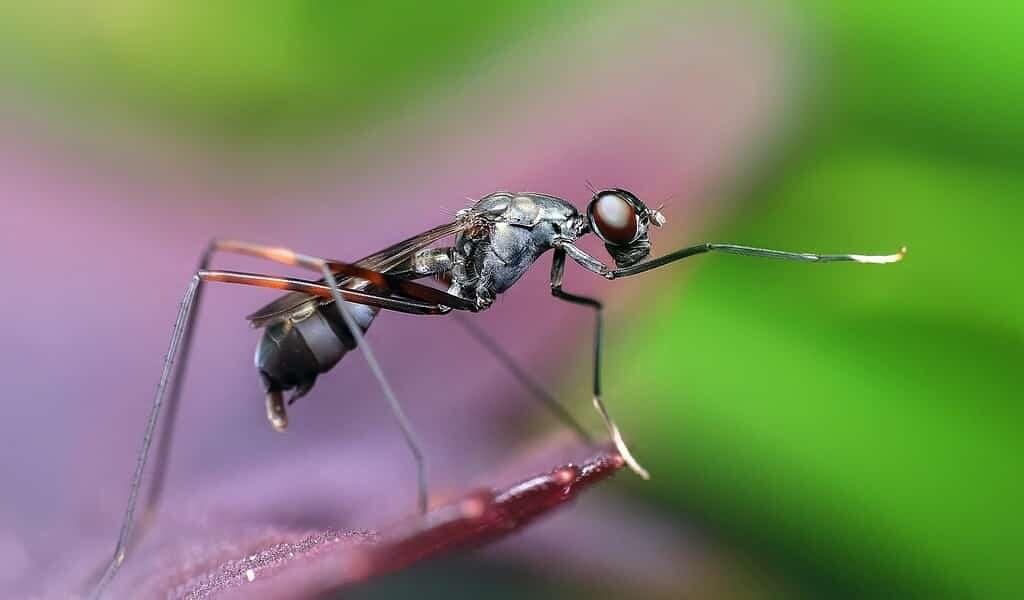 certaines-fourmis-désinfectent-leur-nourriture-avec-des-acides