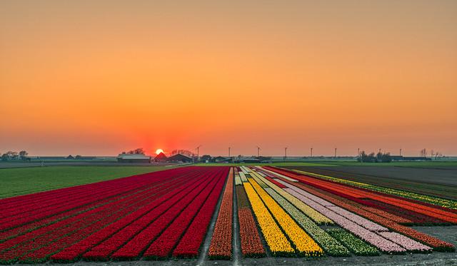 Pick your colour.