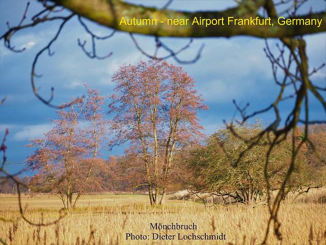 Autumn - Natural Protected Area Moenchbruch, near Airport Frankfurt, Germany