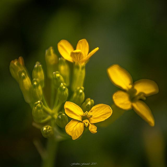 Douce Floraison