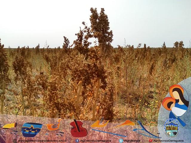 Capacitación técnica en cultivos alternativos