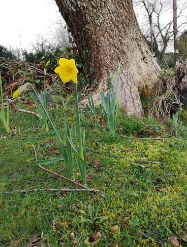 Hopeful sign of spring