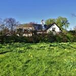 Ashton Park greenery