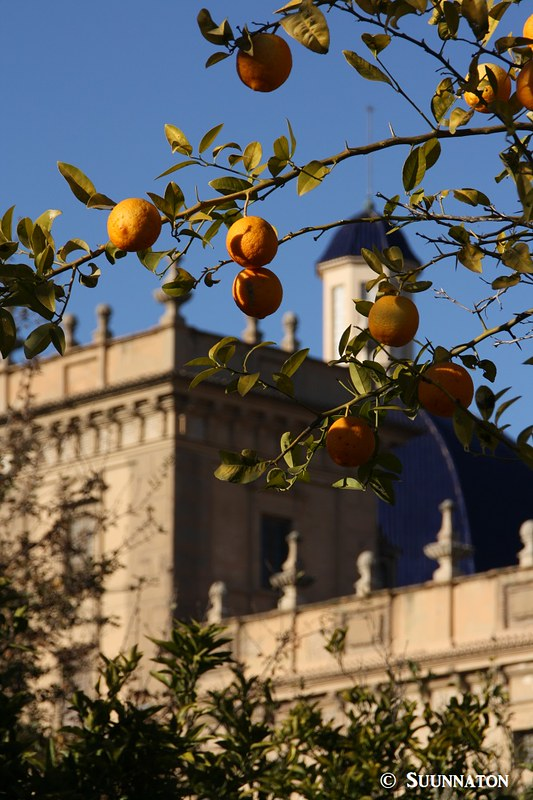 Turia, appelsiinipuu