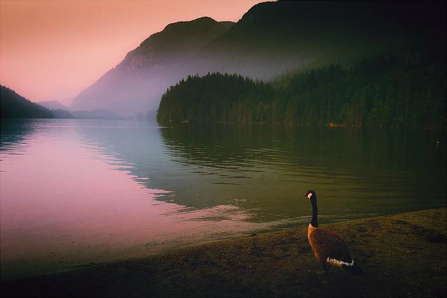 Lake Smoke Goose