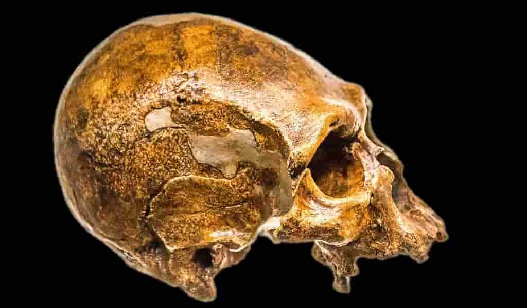 découverte-du-premier-cas-de-métissage-entre-des-populations-humaines-anciennes