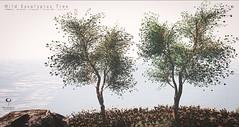 The Little Branch -Wild Eucalyptus Tree @ SENSE