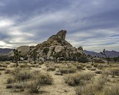 Ryan Campground Headstone Rock in Joshua Tree National Park