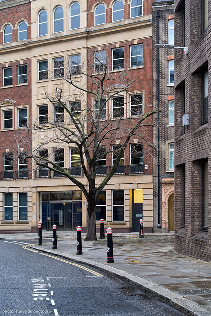 Tree at the Corner of Snow Hill and Cock Lane