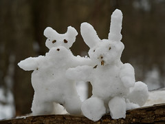 Snow wolf and snow hare