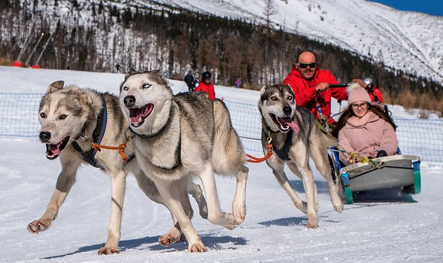 snow dogs 2020