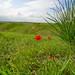 """<p><a href=""""https://www.flickr.com/people/115899696@N05/"""">noam_adir</a> posted a photo:</p>  <p><a href=""""https://www.flickr.com/photos/115899696@N05/49565052611/"""" title=""""Desert flower""""><img src=""""https://live.staticflickr.com/65535/49565052611_99326d8012_m.jpg"""" width=""""240"""" height=""""160"""" alt=""""Desert flower"""" /></a></p>"""
