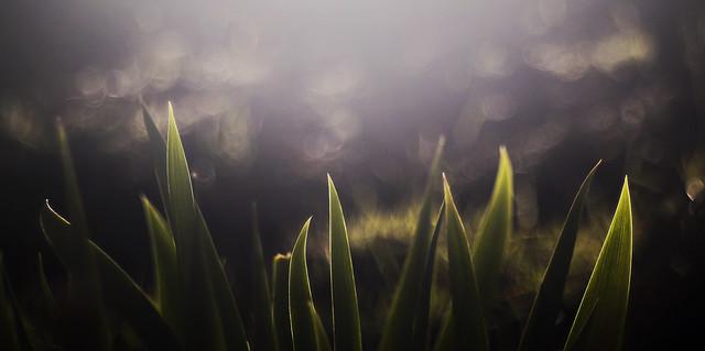 Ethereal Iris
