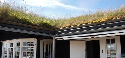 Grass sod roof in Skagen, Denmark