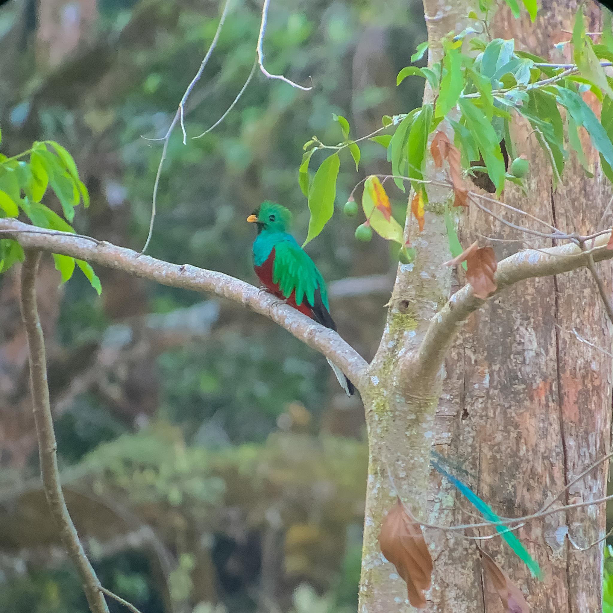 Parc National Los Quetzales - [Costa Rica]