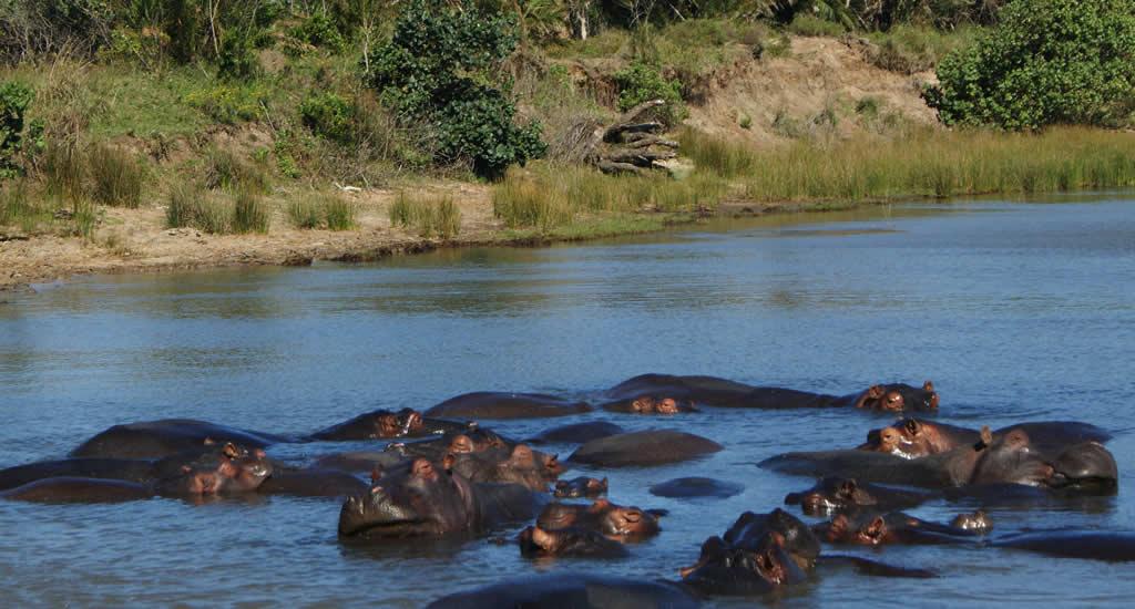 Bezienswaardigheden Zuid-Afrika: iSimangaliso Wetland Park | Mooistestedentrips.nl