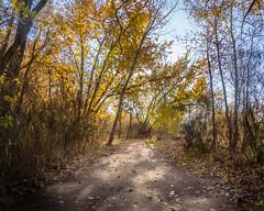 dappled-light-path