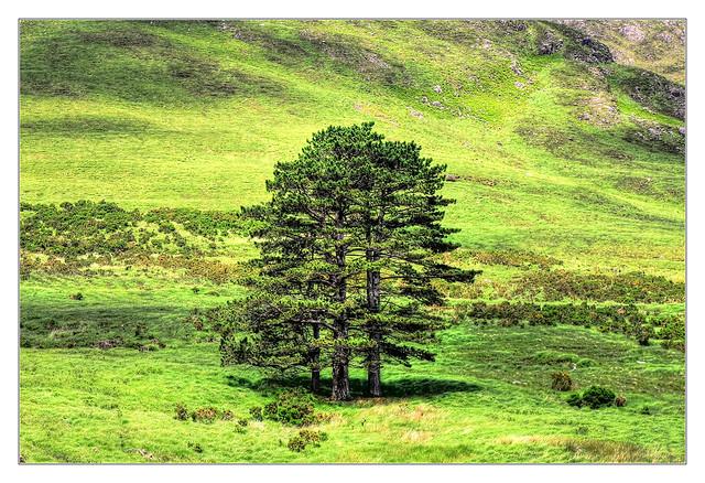 Connemara IR - Aaslegha Falls 04