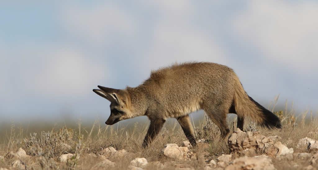 Kgalagadi (Kalahari) Transfrontier Park | Mooistestedentrips.nl