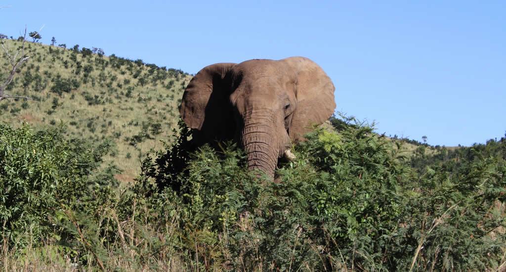Safari Zuid-Afrika, Pilanesberg National Park | Mooistestedentrips.nl