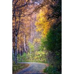 alaska-trail