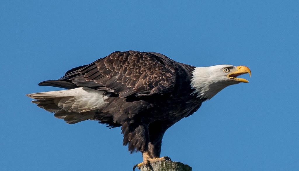 Eagle 2 (1 of 1)