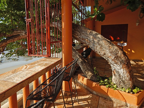 Tree growing through the restaurant La Terracita in Zihuatanejo, Mexico