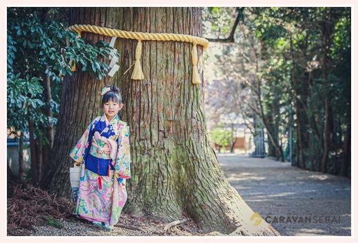 七五三 神社の境内のご神木(杉の大木)の前でポーズ