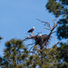 pair_of_bald_eagles_on_nest-20200221-140-Edit