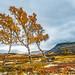 Rondane - fall