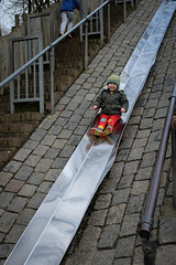 Ziggy on the big slide
