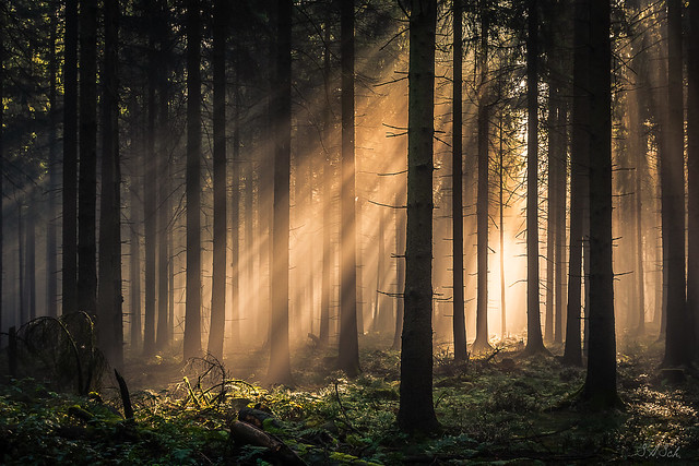 forest series #496
