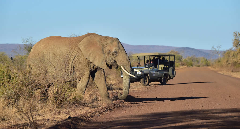 Bezienswaardigheden Zuid-Afrika: Madikwe Game Reserve | Mooistestedentrips.nl