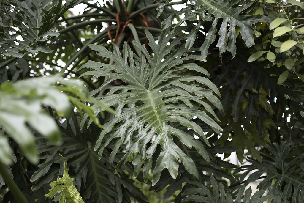 Фондовая оранжерея Ботанического сада_джунги