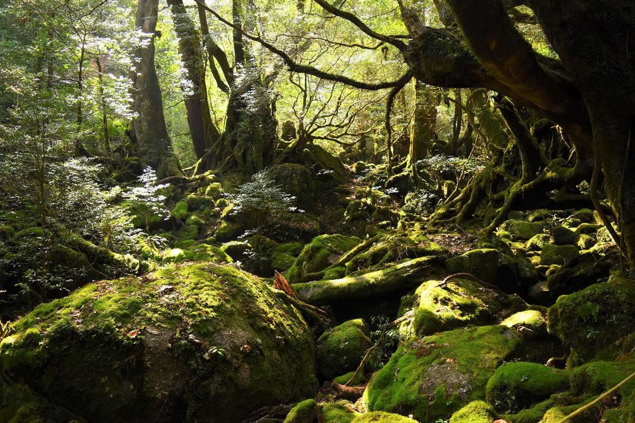 屋久島・白谷雲水峡 もののけの森