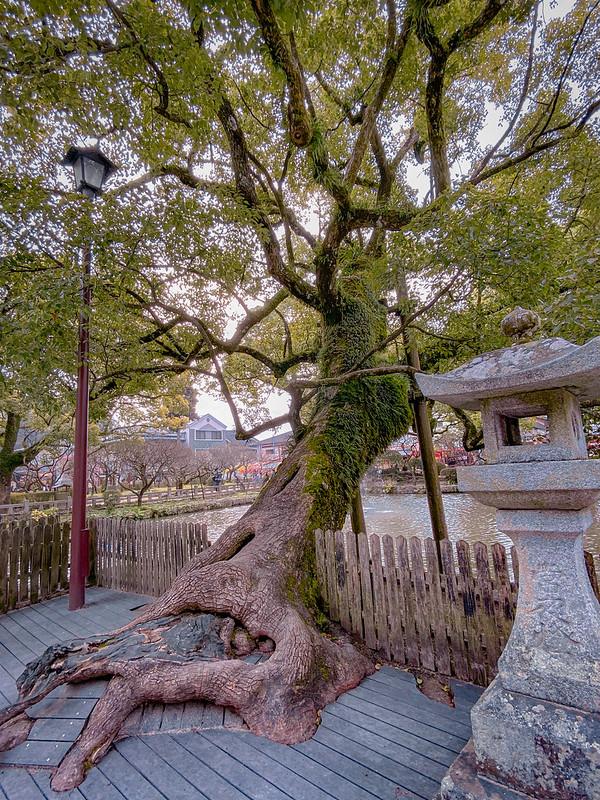 Dazaifu Tenmangu Shrine 太宰府天満宮