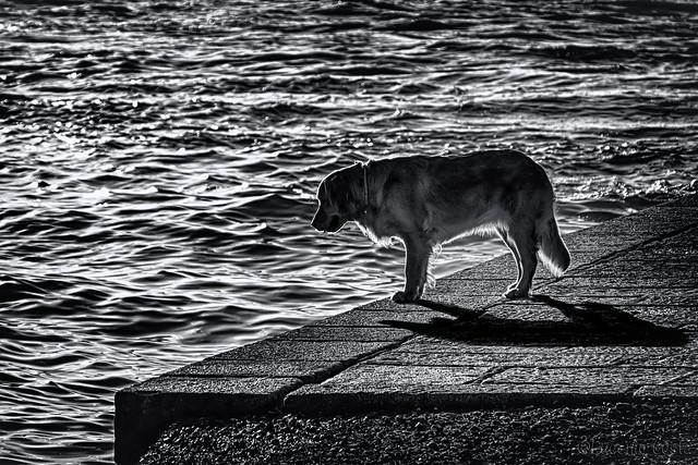 Anche lui guarda il mare - He too looks at the sea