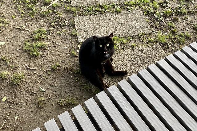 Today's Cat@2020-02-22